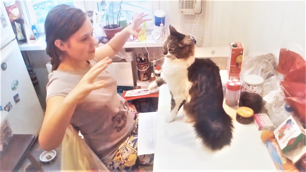Прикольные видео с котами за…
