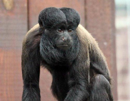 Топ-25: Животные, существование которых доказывает, что мать-природа не лишена чувства юмора