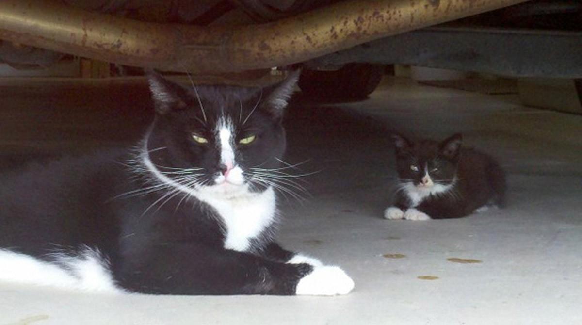 lolcats18 100 лучших фотографий кошек всех времен и народов