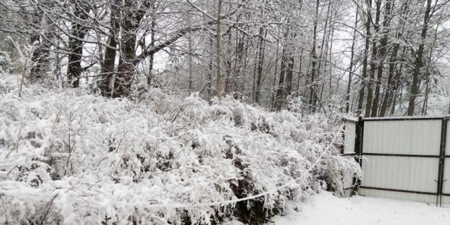Зима близко: снег накрыл запад Ленобласти
