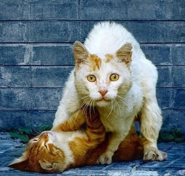 Март коты фото