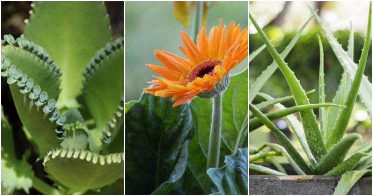 10 комнатных растений, которые активны даже в ночное время
