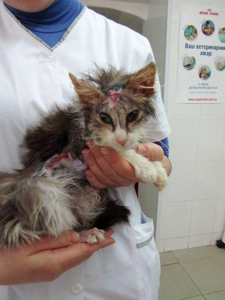 Спасайте животных! Моя обожённая кошка Апика.