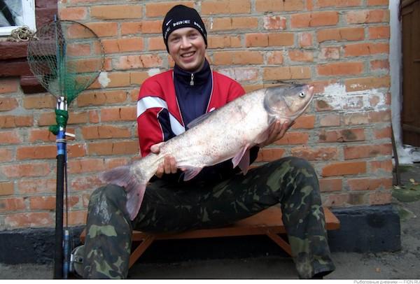 Что за рыба толстолобик и как ее ловить