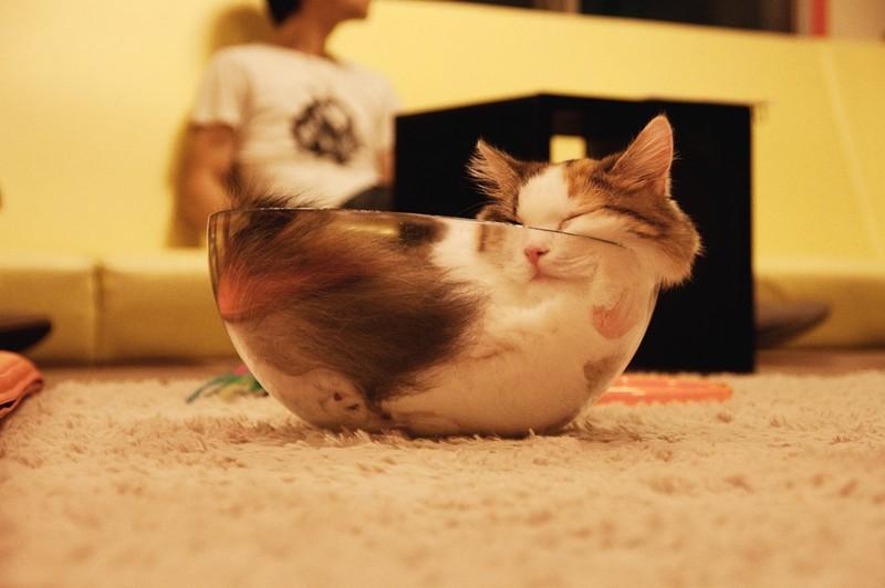 sleepingcats25 Коты, познавшие науку сна