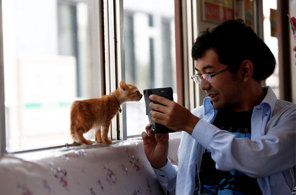 По Японии начал курсировать поезд с кошками