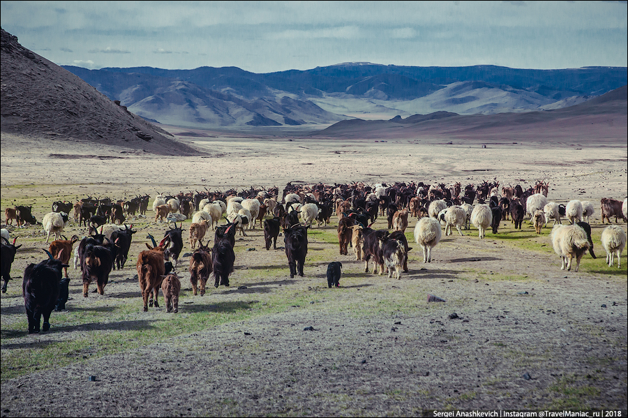 Монголы считают вегетарианство психическим отклонением
