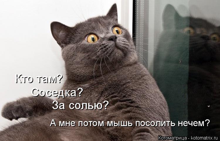 Котоматрица: Кто там?  Соседка?   За солью? А мне потом мышь посолить нечем?