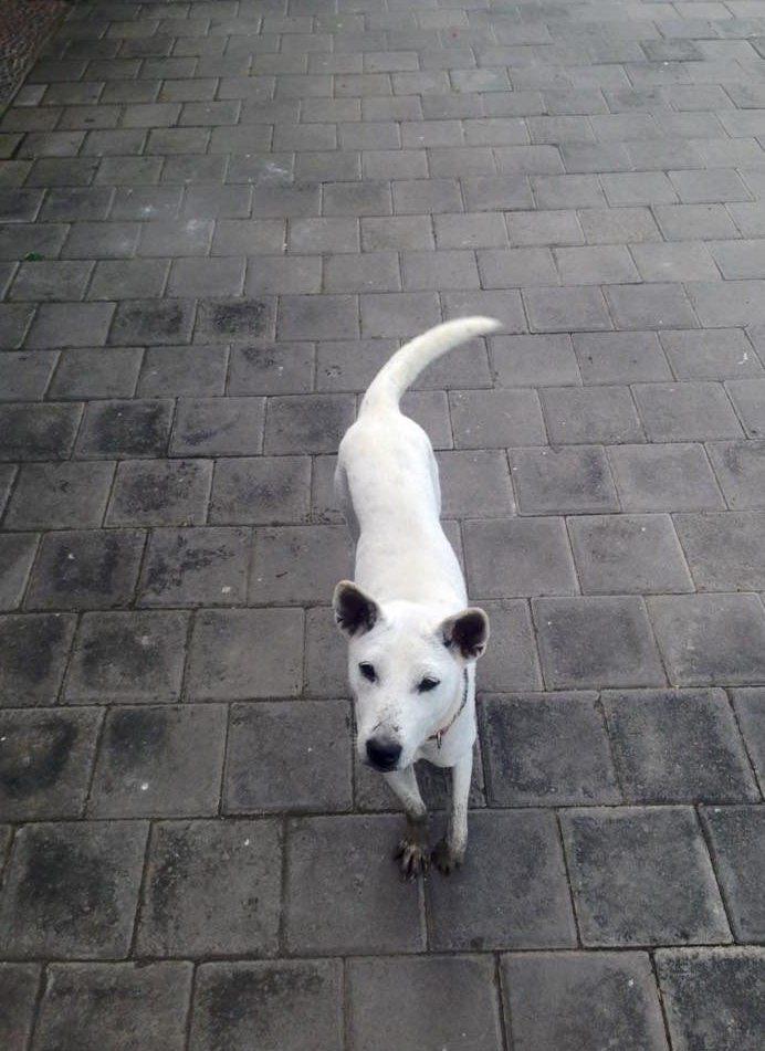 Только Богу известно, что пережила эта собака. История спасения в 15 фотографиях...
