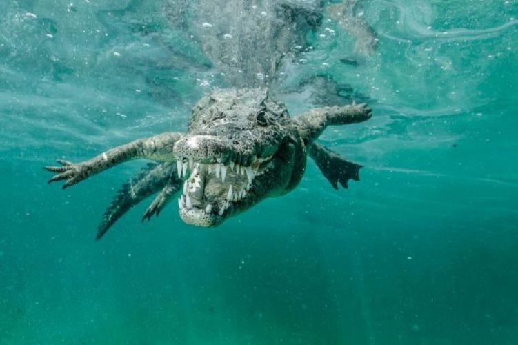 Рандеву с крокодилом