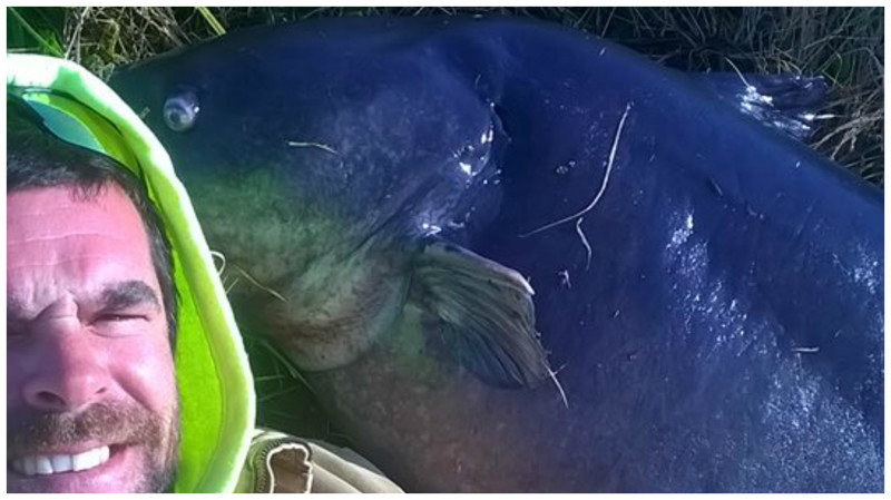 Удачливый рыболов поймал огромного сома