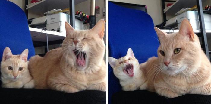 8. Мама и дочь котенок, кошка