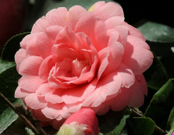 Самые дорогие цветы в мире Топ - 10