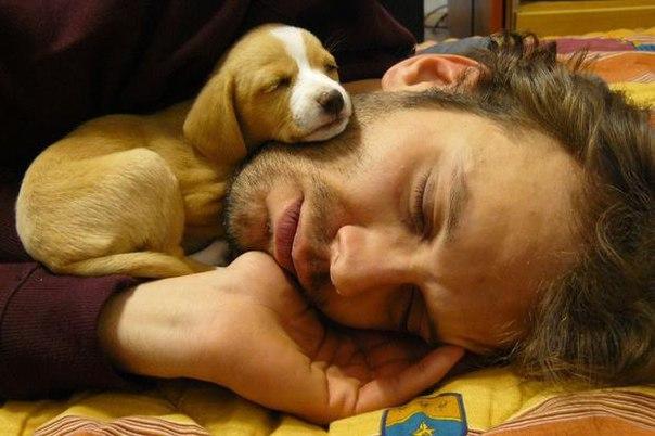 Любители собак застрахованы от болезней сердца - ученые