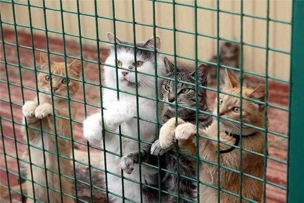 Письмо от руководителя приюта для животных.