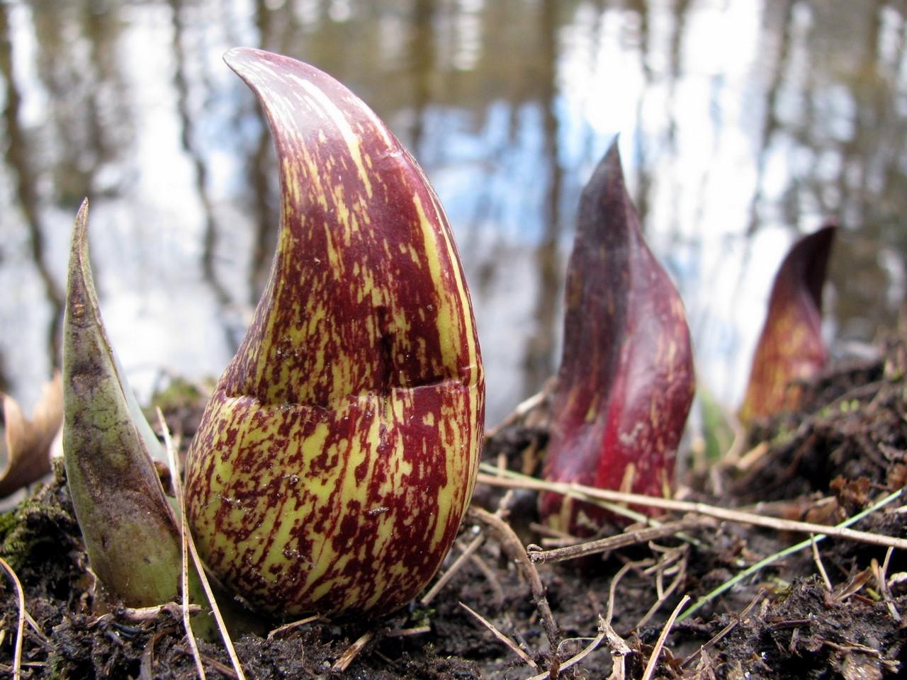 Реальное чудо -природы:  Теплокровные растения