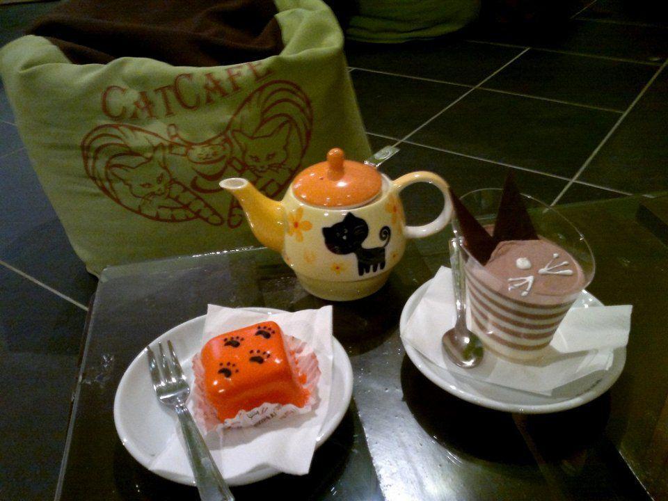 catcafe04 Самые необычные «кошачьи» кафе из разных стран мира