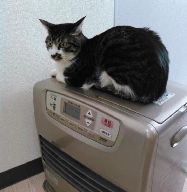 японский офис в котором находятся кошки