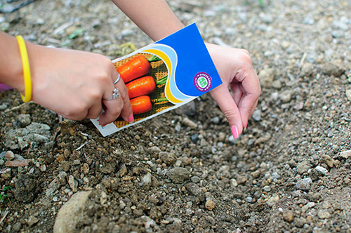 Посадка моркови осенью: пошаговая инструкция.