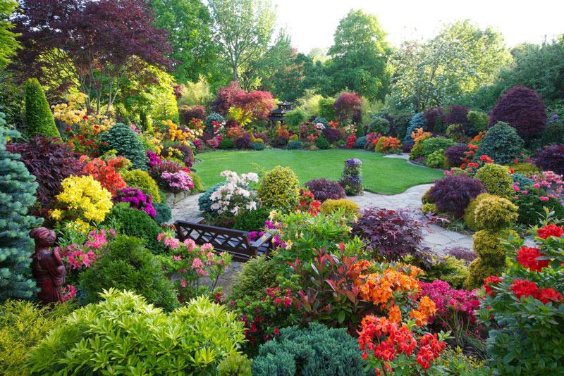 Цветы в саду и в огороде дизайн
