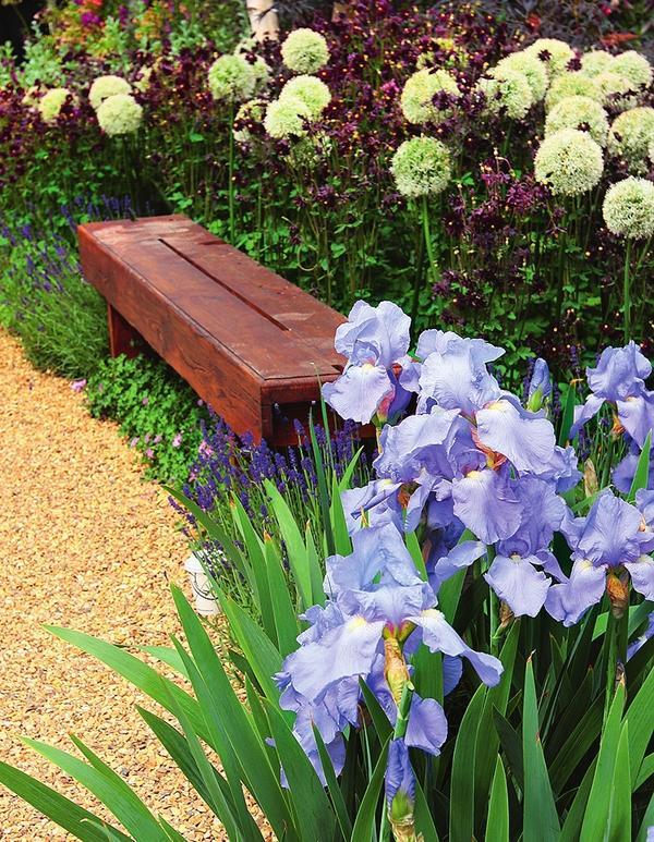 Свежо и оригинально выглядят луковичные, высаженные прямо под садовыми скамьями.