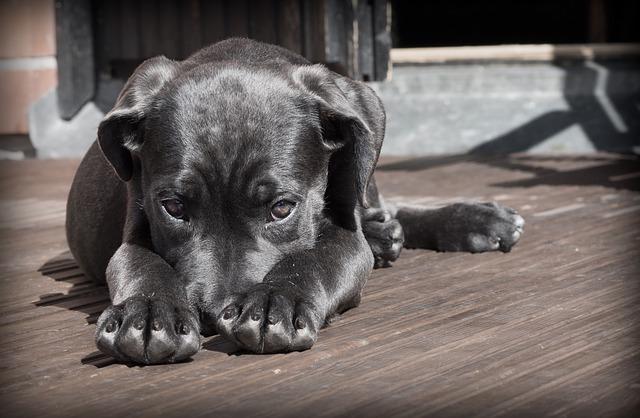 Домашнее Животное, Собака, Щенок, Застенчивый, Милый