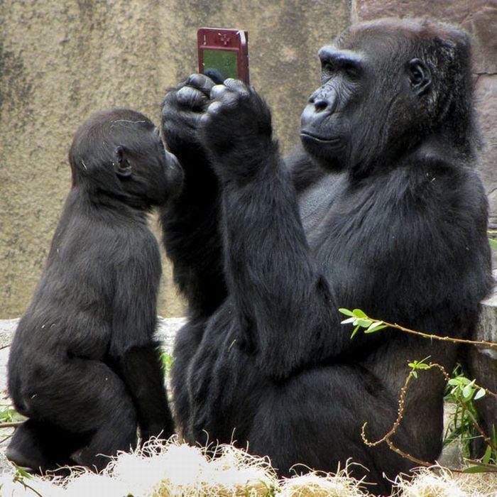 Animals_2.jpg