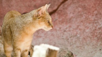 Эвакуация животных из затопл…