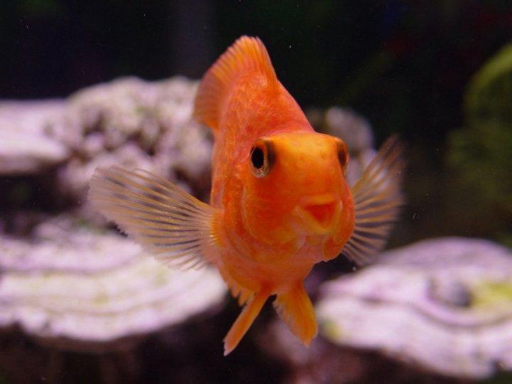 Инвалидная коляска для золотой рыбки