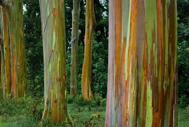 необычные деревья-12
