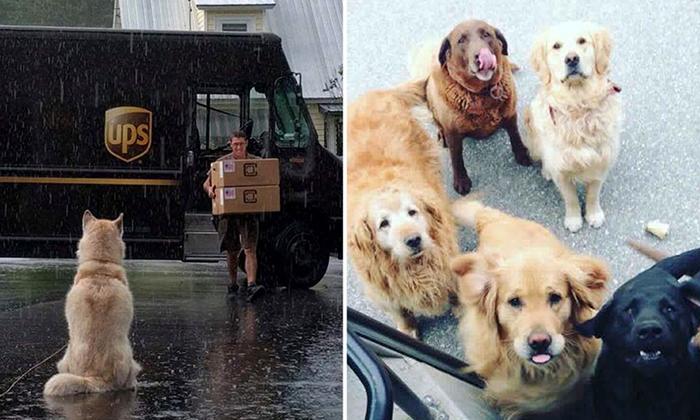 Как собаки встречают почтальонов