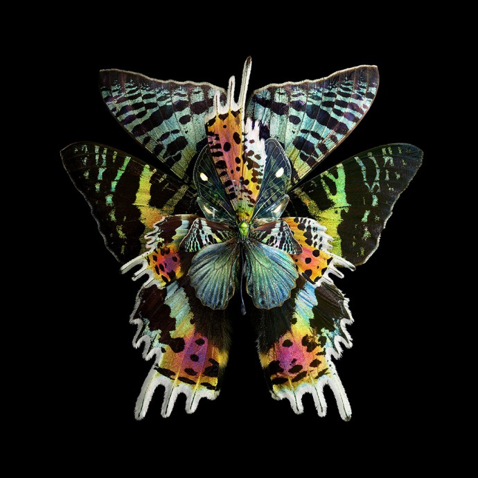 Цветы из крыльев бабочек от Seb Janiak