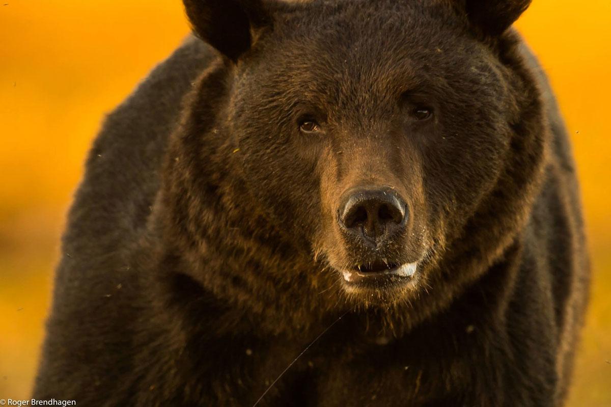 Эти фотографии диких животных фотограф сделал, рискуя своей жизнью, но вы посмотрите, какая получилась красота!