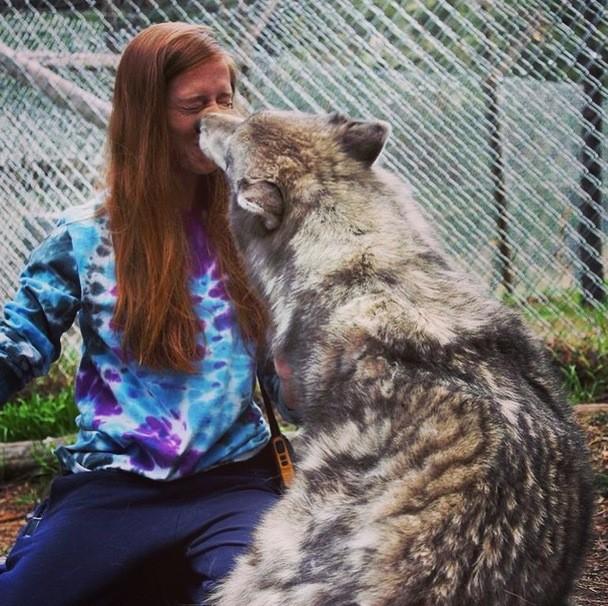 Доказательства того, что волки очаровательны!