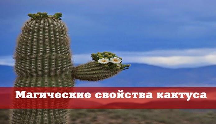 Магические свойства кактуса - Форум