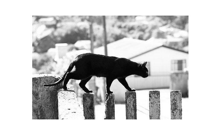 Знаменитый британский кот-клептоман вновь встал на преступный путь