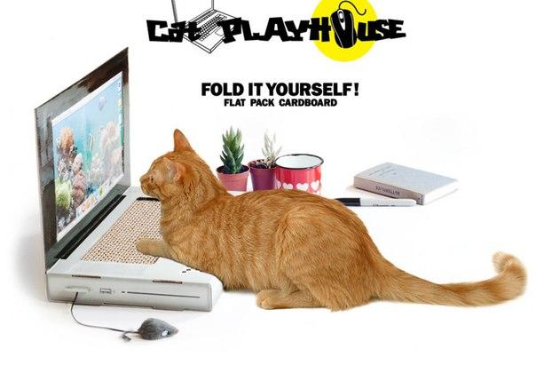 Выпущен ноутбук для кошек