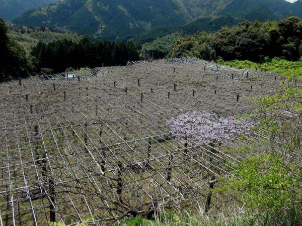 Сказочный сад Кавати Фудзи в Японии