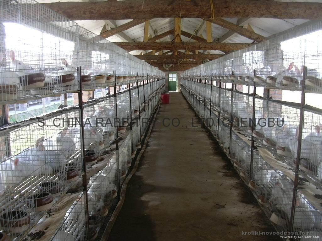 Как это работает: сколько приносит кроличья ферма