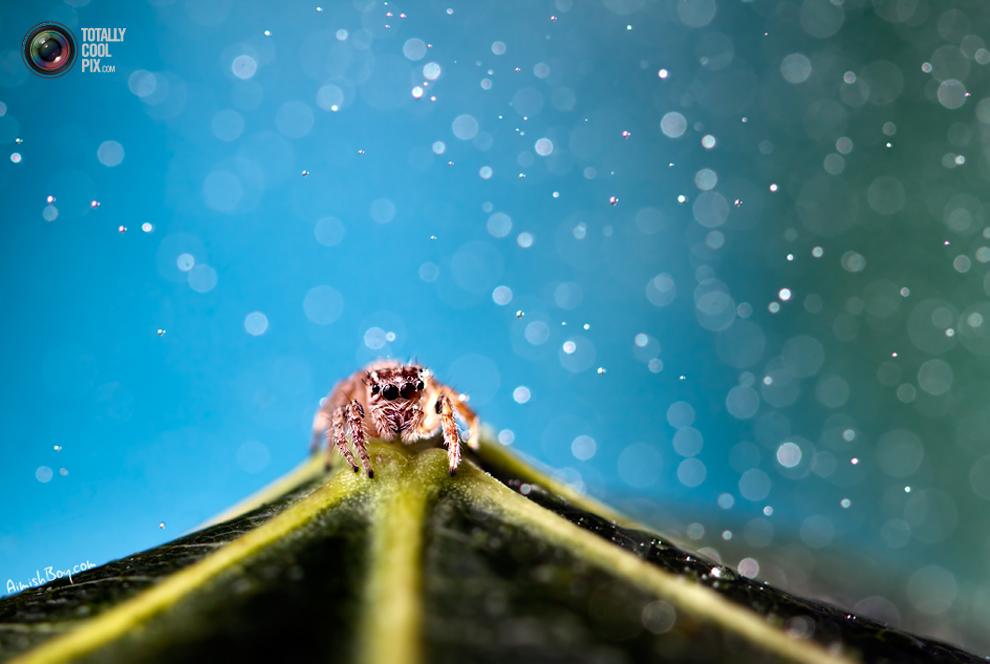 aimishboy 005 Удивительная макрофотография: неожиданно гламурные насекомые и многое другое