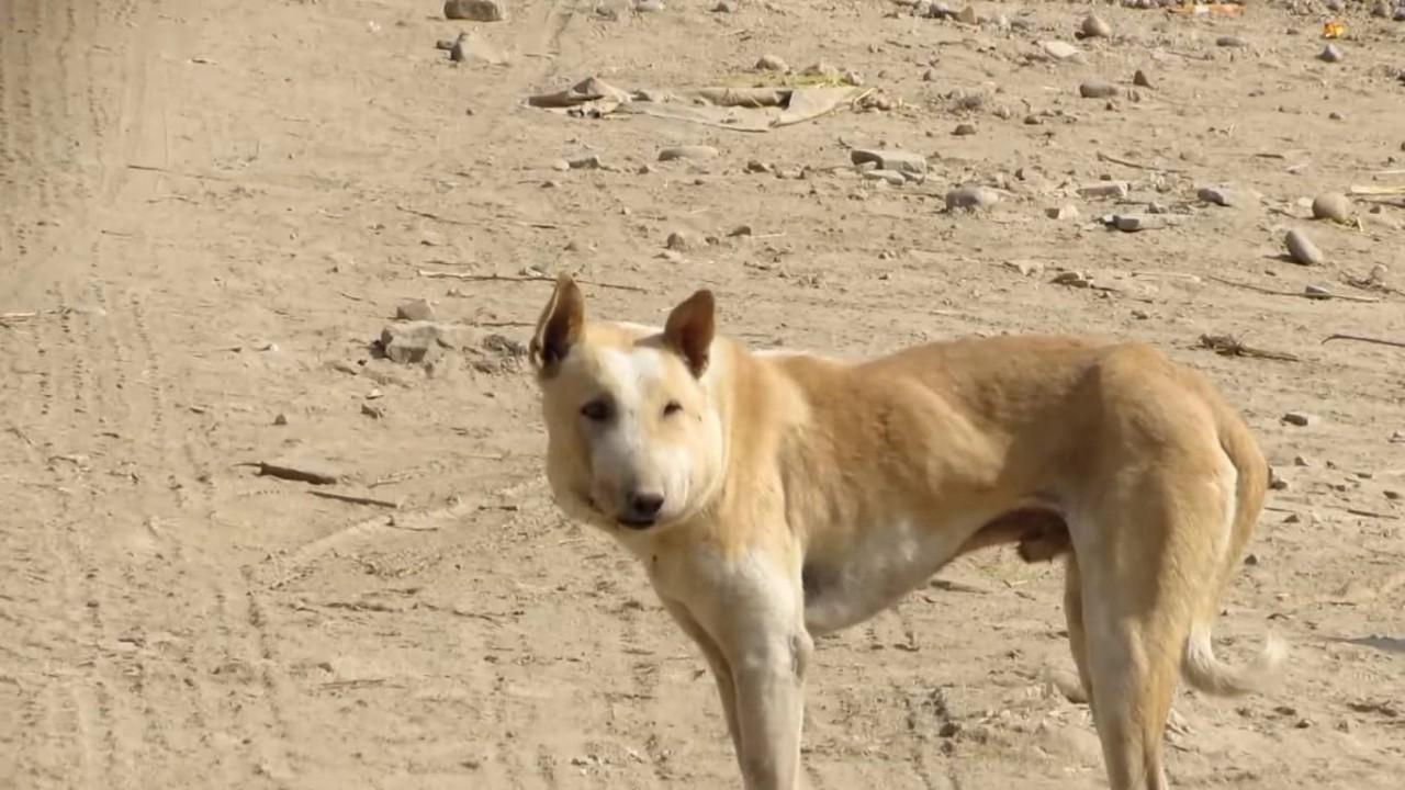 Когда волонтеры нашли эту собаку, их сердце сжалось от ужаса и боли…