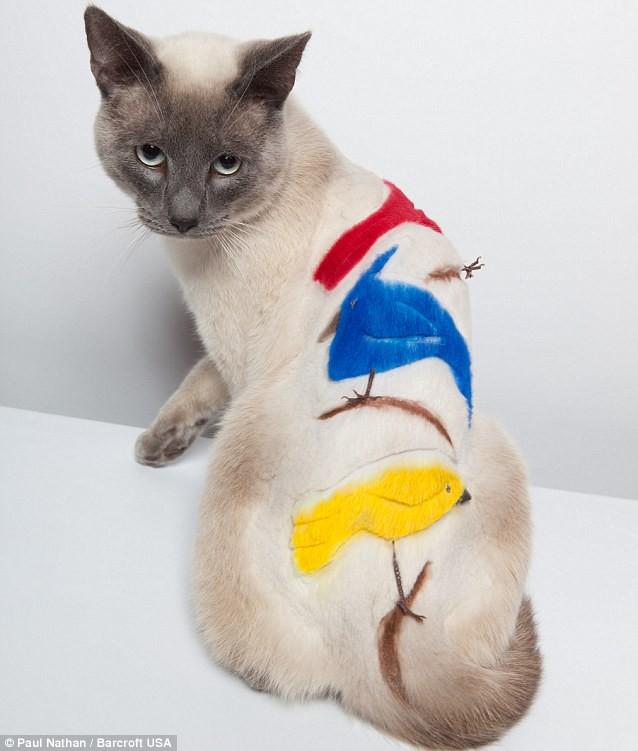 Кошачьи стрижки или когда твой хозяин - парикмахер