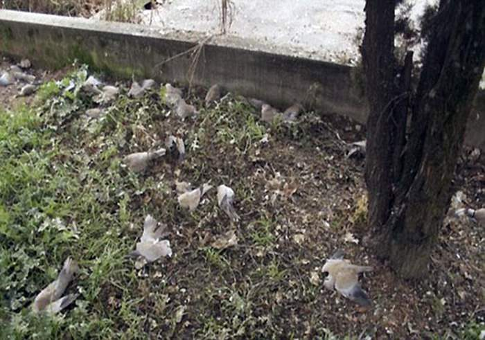 Птицепад в индийской долине Джатинга