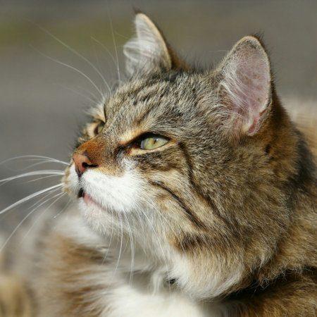 Животные антидепрессанты, фотографии