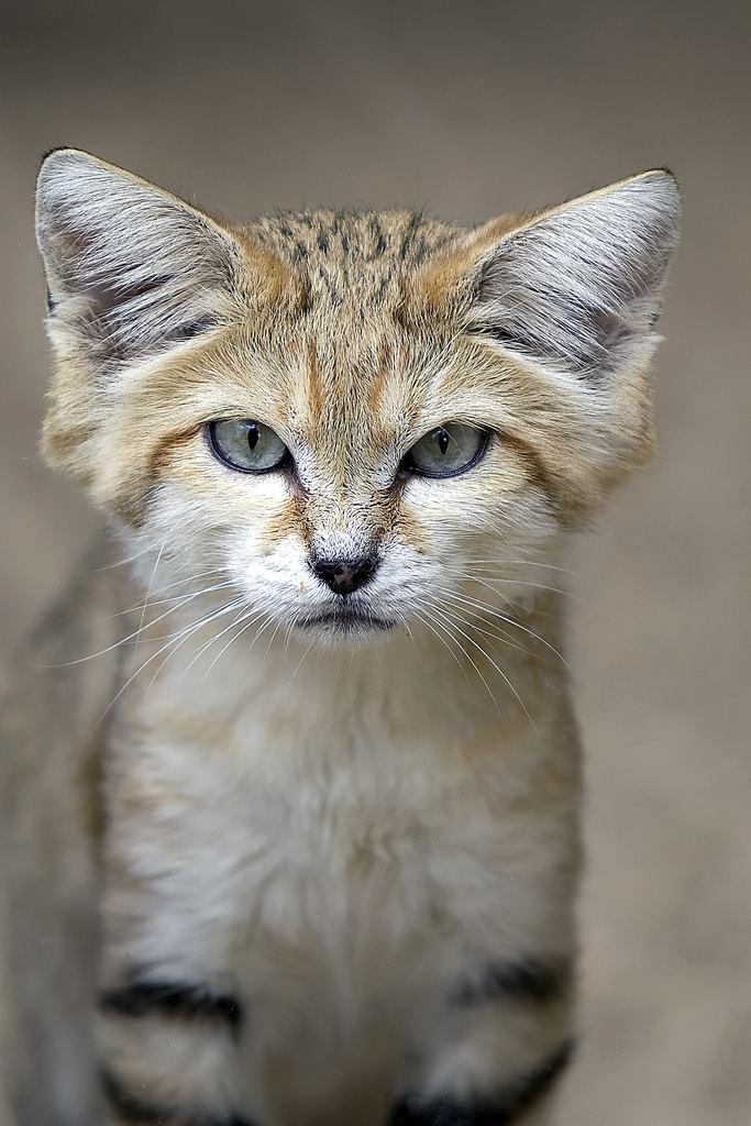 Как выглядят котята