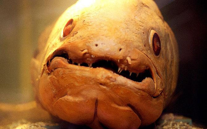 рыбы, страшное