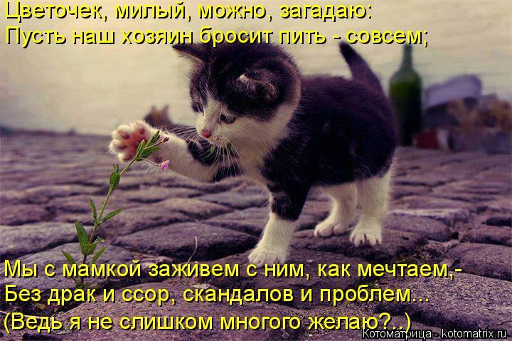 Котоматрица: Цветочек, милый, можно, загадаю: Пусть наш хозяин бросит пить - совсем; Мы с мамкой заживем с ним, как мечтаем,- Без драк и ссор, скандалов и про