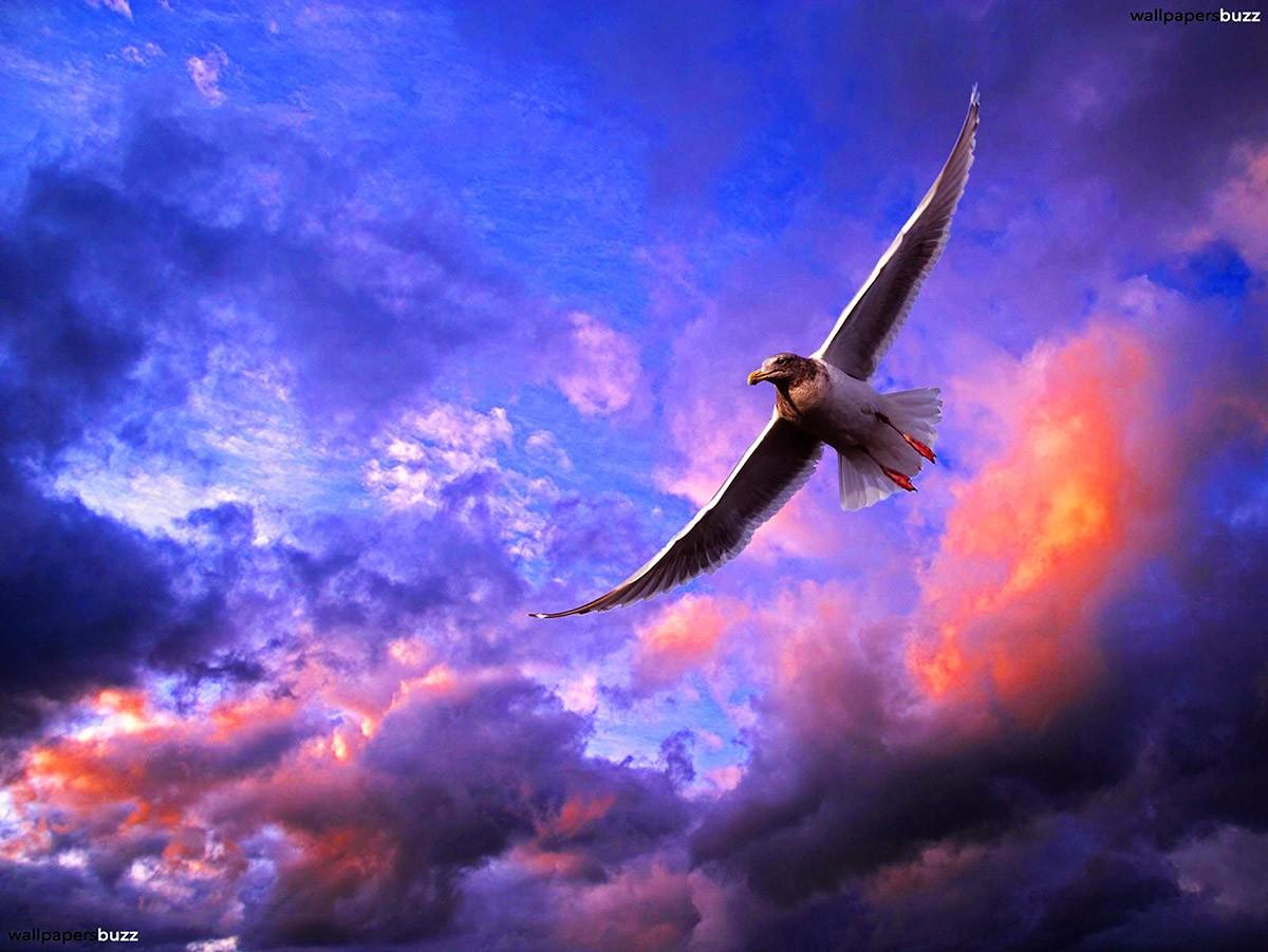http://foto.infan.ru/img/f/75/b/b_beautiful-seagull_changed.jpg