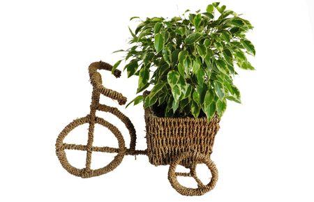 Уход за комнатными растениями: проблемы и их решение
