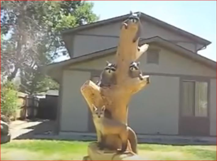 Как превратить старые деревья в чудные скульптуры...